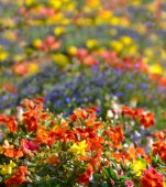 Colorful wild flowers decoration — Stock Photo