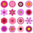 ������, ������: Collection Various Purple Concentric Flowers Isolated on White
