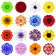 Big Collection of Various Concentric Flowers Isolated on White — Stock Photo