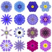 Collection Various Blue Concentric Flowers Isolated on White — Stock Photo