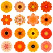 Collection Various Orange Concentric Flowers Isolated on White — Stock Photo