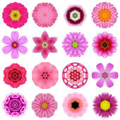 Collection Various Purple Concentric Flowers Isolated on White — Stock Photo