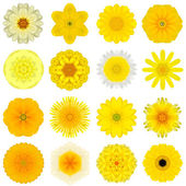 Collection Various Yellow Concentric Flowers Isolated on White — Stock Photo