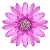 Pink Mandala Flower Ornament. Kaleidoscope Pattern Isolated — Stock Photo