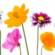 Collection of Various Colorful Flowers Isolated on White — Stock Photo #60143217