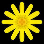 Yellow Flower Mandala Kaleidoscope Isolated on Black — Stock Photo