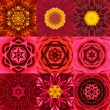Collection of Nine Red Concentric Flower Mandalas Kaleidoscope — Stock Photo #68705817