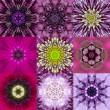 Collection of Nine Purple Concentric Flower Mandala Kaleidoscope — Stock Photo #68705865