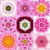 Collection of Nine Pink Concentric Flower Mandalas Kaleidoscope — Stock Photo