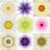 Collection of Nine White Concentric Flower Mandalas. Concentric — Stock Photo