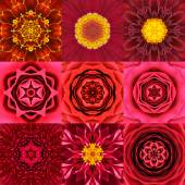 Collection of Nine Red Concentric Flower Mandalas Kaleidoscope — Stock Photo