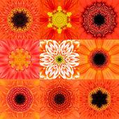 Collection of Nine Orange Concentric Flower Mandala Kaleidoscope — Stock Photo