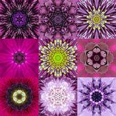 Collection of Nine Purple Concentric Flower Mandala Kaleidoscope — Stock Photo