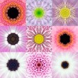 Collection of Nine Pink Concentric Flower Mandalas Kaleidoscope — Stock Photo #71605933