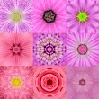 Collection of Nine Pink Concentric Flower Mandalas Kaleidoscope — Stock Photo #71606911