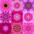 Collection of Nine Purple Concentric Flower Mandala Kaleidoscope — Stock Photo #71607151