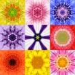 Collection Set Nine Flower Mandalas Various Colors Kaleidoscope — Stock Photo #79478072