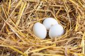 Chicken eggs in the nest — Stock Photo