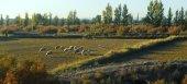 Sheeps on the autumn field — Stock Photo