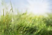Spider's web between the blades of grass — Stock Photo