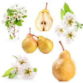 Spring flowers and pear — Stock Photo