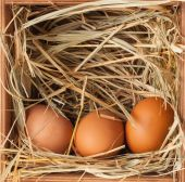 Egg in hay — Stock Photo