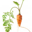 Fresh carrots with green tops isolated on white background — Stock Photo #55857461