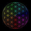 Rainbow flower of life — Stock Photo #68629843