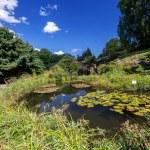 Garden pond — Stock Photo #55310229