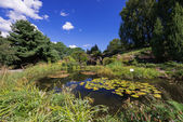 Pond with waterlily flowers — Stock Photo