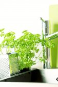 Faucet, grater and parsley — Stock Photo