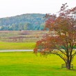 Big branchy autumn tree  and green grass on a meadow around. — Stock Photo #57102751