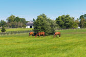 Green pastures of horse farms. Country summer landscape.  — Stock Photo