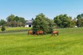 Gröna ängar av hästgårdar. landet sommar landskap. — Stockfoto