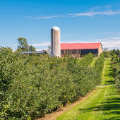 Country farm and  orchard landscape — Stock Photo