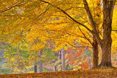 Colorful autumn foliage — Stock Photo