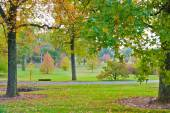 Colorful autumn in park — Foto Stock