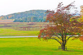 Big branchy autumn tree  and green grass on a meadow around. — Stock Photo