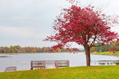 Lonely autumn tree near lake on overcast day. — Stock Photo