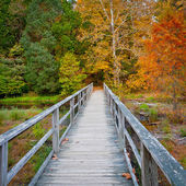 Wooden bridge over creek in autumn forest. — Foto Stock