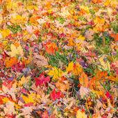 Autumn leaves on grass — Stock Photo