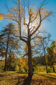 Big tree with interesting shape backlit in the park — Foto de Stock