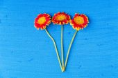 Three gerbera daisy flowers on blue textured canvas background — Stock Photo