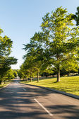 Road in a park. — Stock Photo