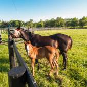 Mare with her foal in pastures of horse farms. — Stock Photo
