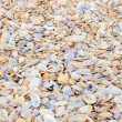 Colorful Sea Shell background — Stock Photo #65752281