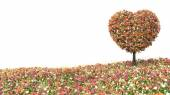Tree flower in the shape of heart isolated on white — Stock Photo