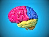 Colorfull human brain — Stock Photo
