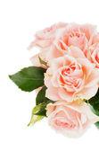 Crème roze rozen — Stockfoto