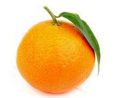 Tangerine — ストック写真